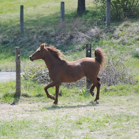 This beautiful horse pranced with confidence while staying in this paddock.